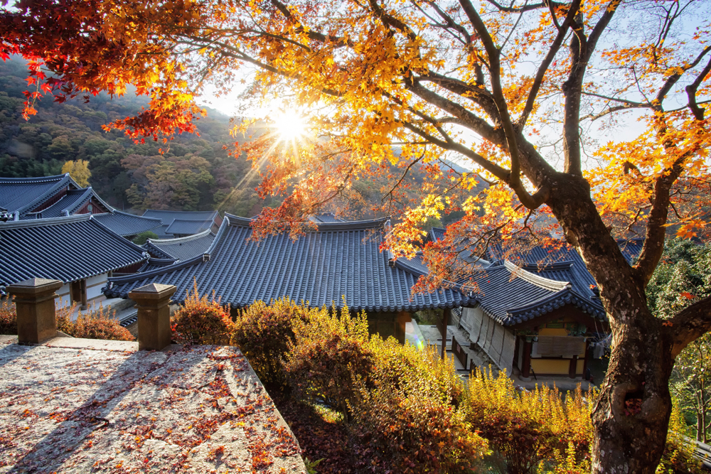 An autumn scene at Songkwansa in South Korea. This is one of the best creative photos Simon Bond took in 2018.