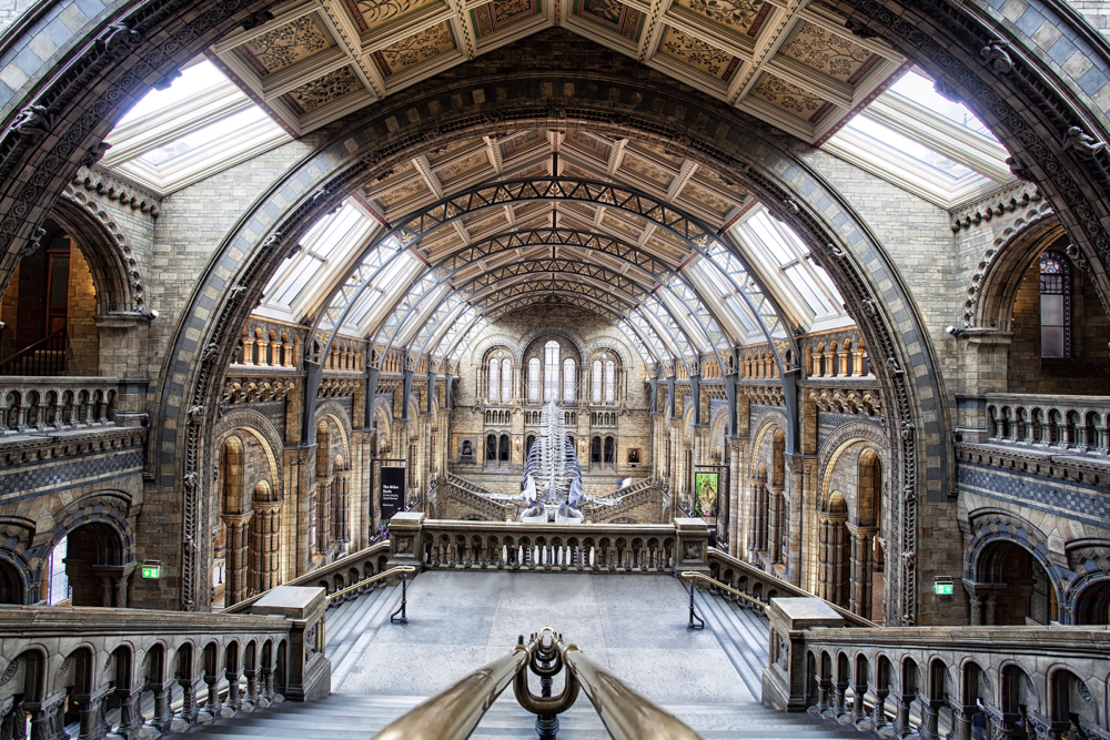 The interior roofing of the Natural History Museum in London. This is one of the best creative photos Simon Bond took in 2018.