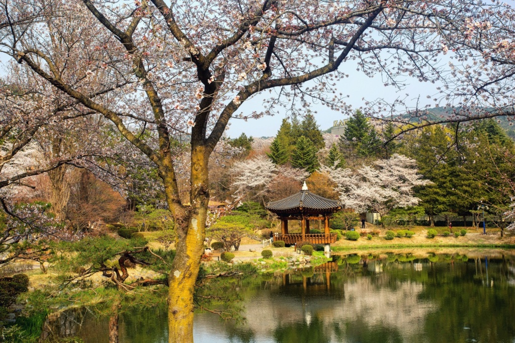 The Bomun lake pagoda in Gyeonju during Spring.