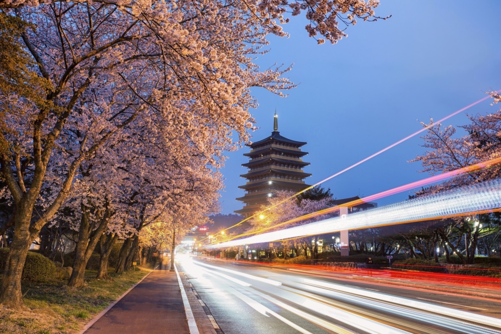 A creative photo of traffic light trails and cherry blossom trees.