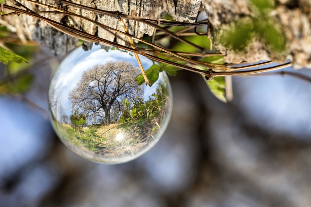 An image of a lensball used to take a photo of a cherry blossom tree during spring.